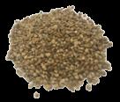 coquille-de-noix-prétraitée
